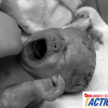 Scalping Babies...for Profit
